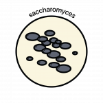 Website Icon_Saccharomyces color